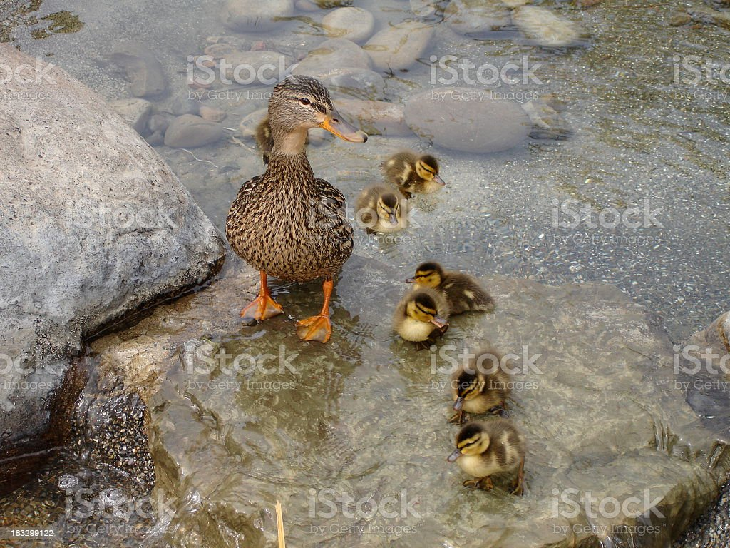 Momma Was Wet royalty-free stock photo