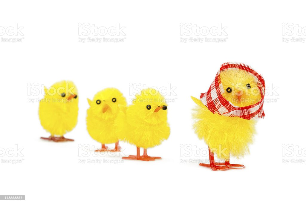 mommy chick and three babies following royalty-free stock photo