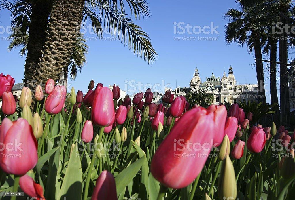 Monaco Tulips stock photo