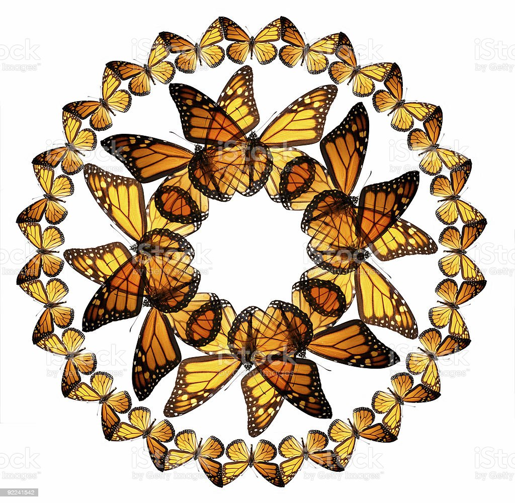 Monarch Butterflies royalty-free stock photo