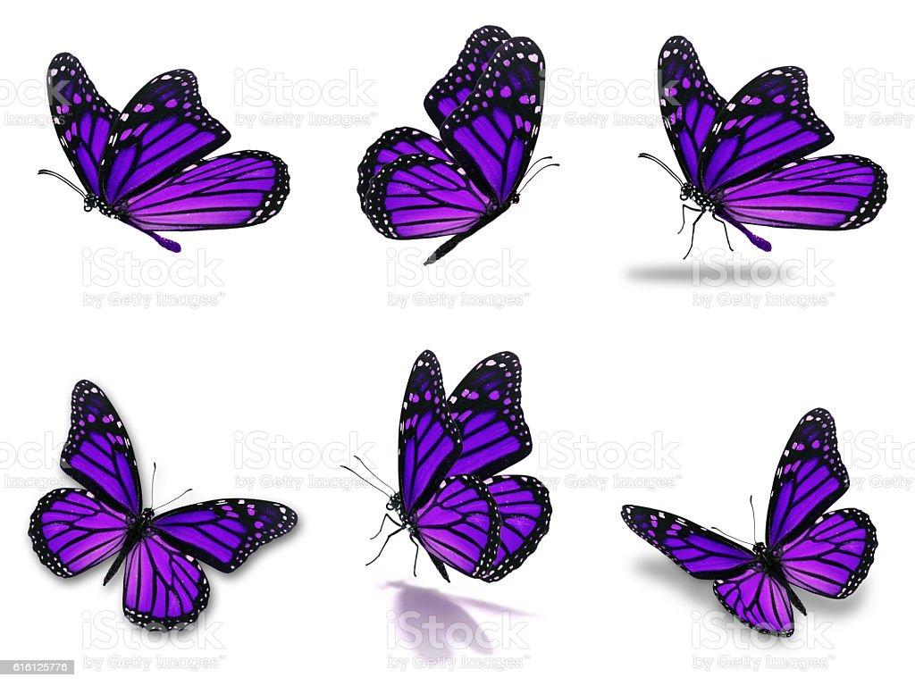 monarch butterflies set stock photo