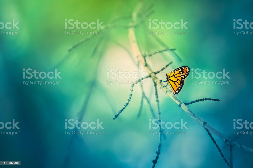 Monarch Butterfly On Tree Branch With Bokeh Background stock photo