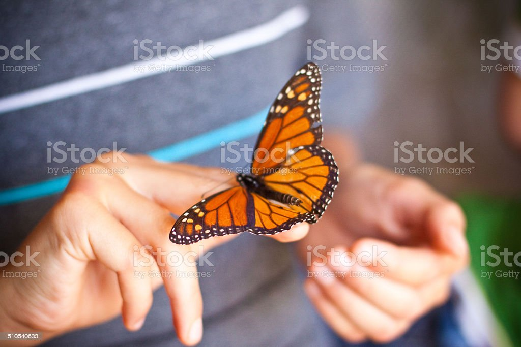 Monarch royalty-free stock photo