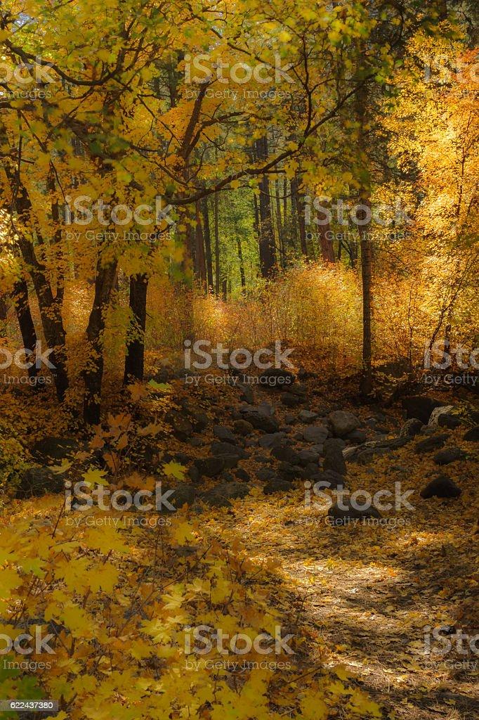 Monet's Vision of the Fall Color display in Sedona Arizona stock photo