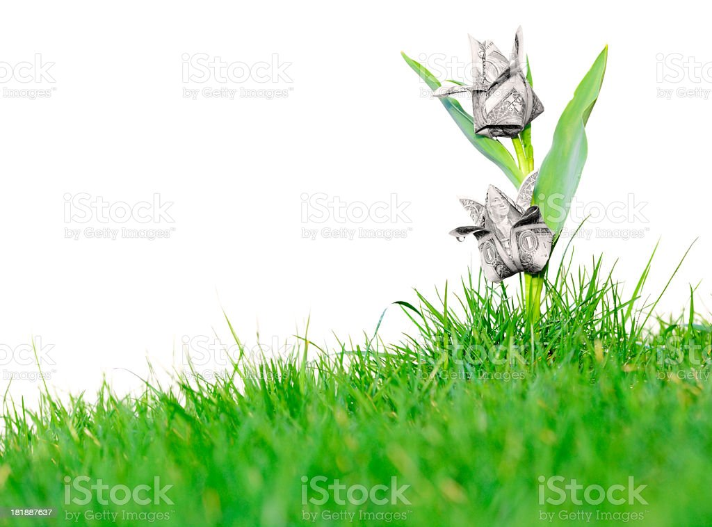 Money blooming like flowers in the green grass stock photo