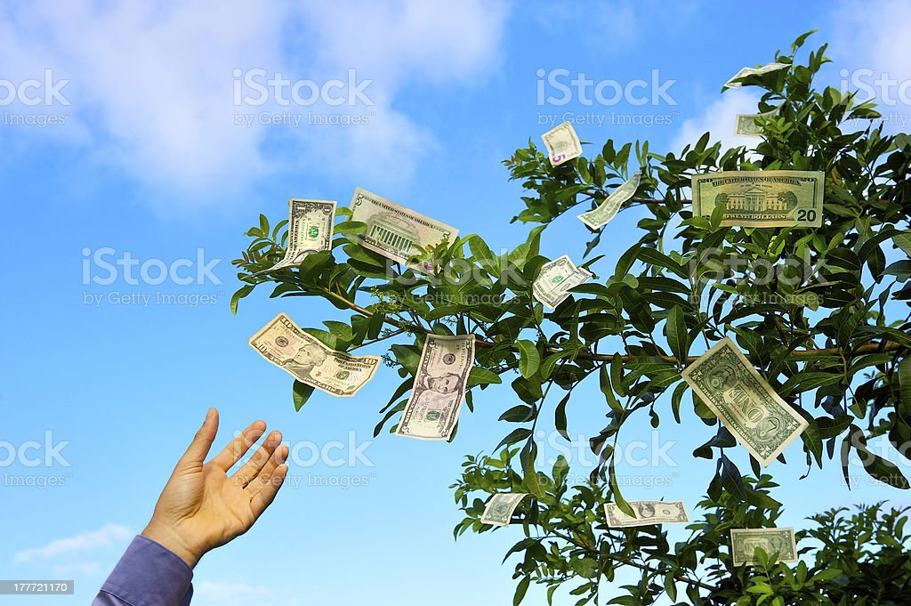 Money Doesn't Grow on Trees stock photo