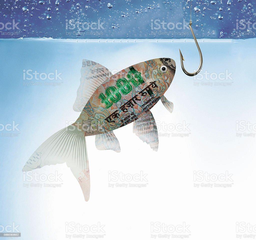 Money fishing stock photo