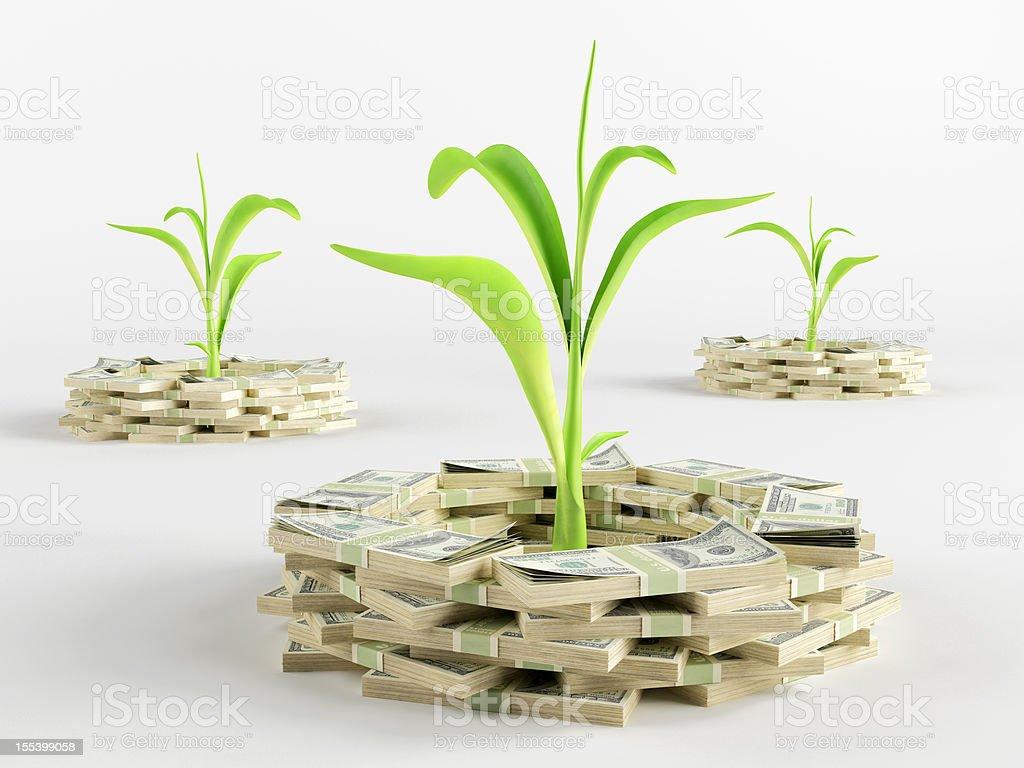 Money germ royalty-free stock photo