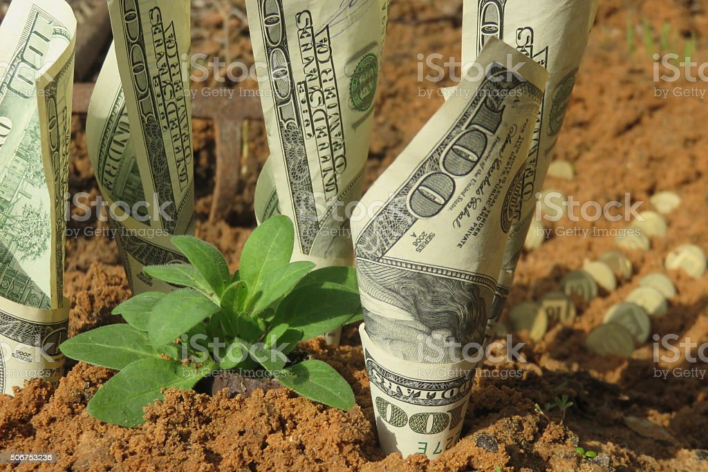 Money growing from a garden stock photo