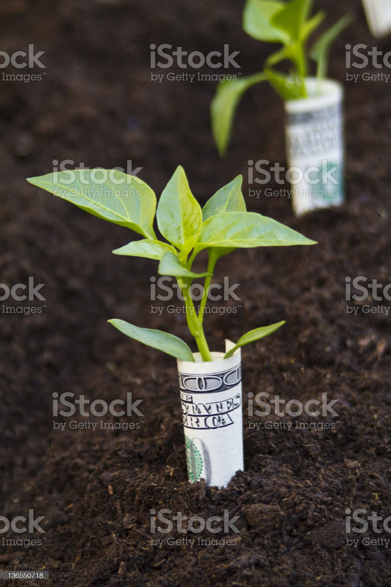Money Growing Garden royalty-free stock photo