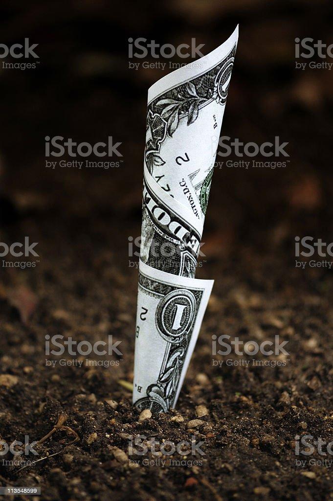 Money growing II royalty-free stock photo