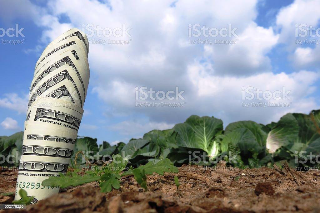 Money growing like grass stock photo