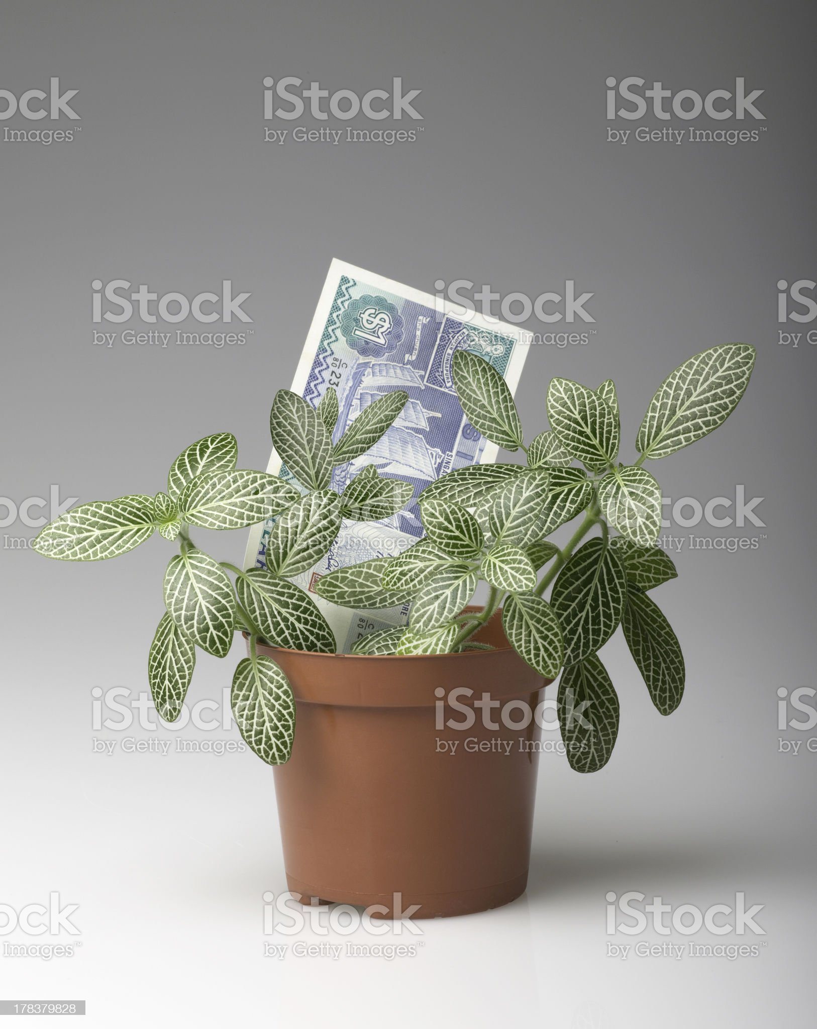 Money growing royalty-free stock photo