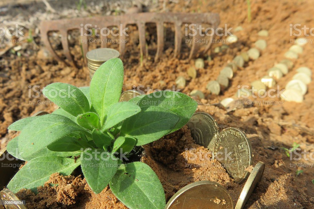Money growth. Flowerbeds of Money in a row stock photo