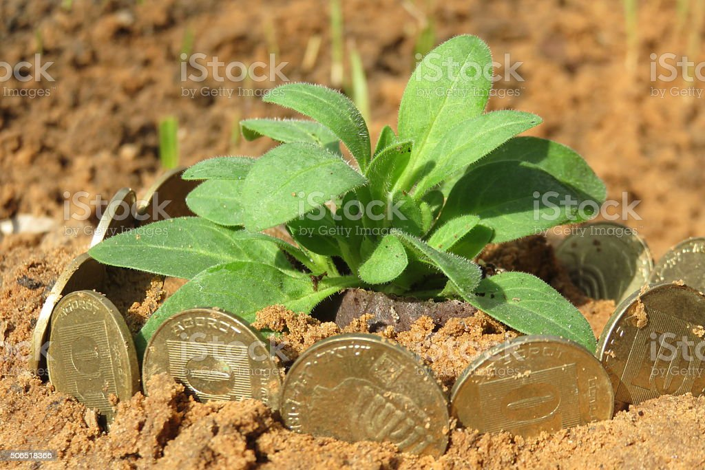 Money growth.Coins growing from soil stock photo