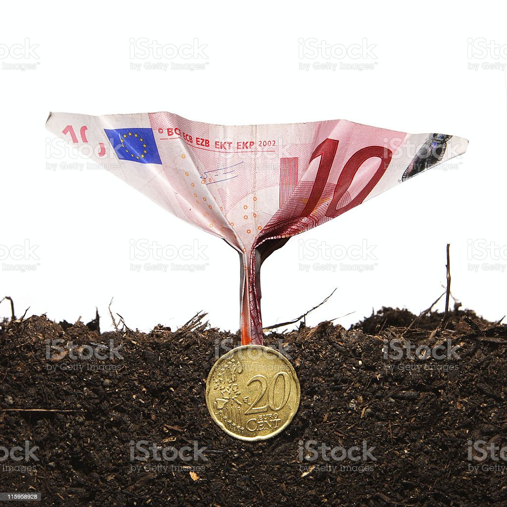 Money plant 2 royalty-free stock photo