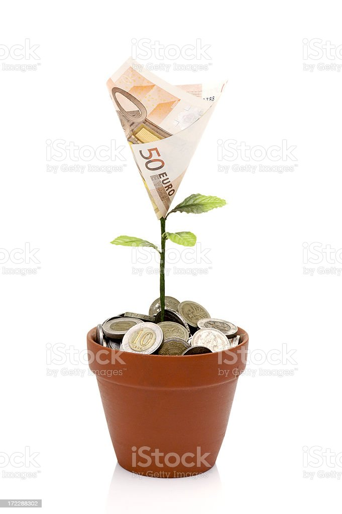 Money plant over white background stock photo