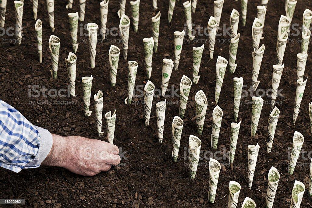 Money plants royalty-free stock photo
