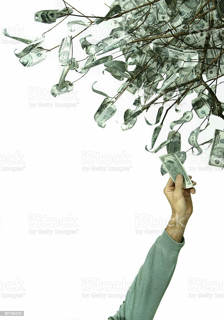 money tree 1 stock photo