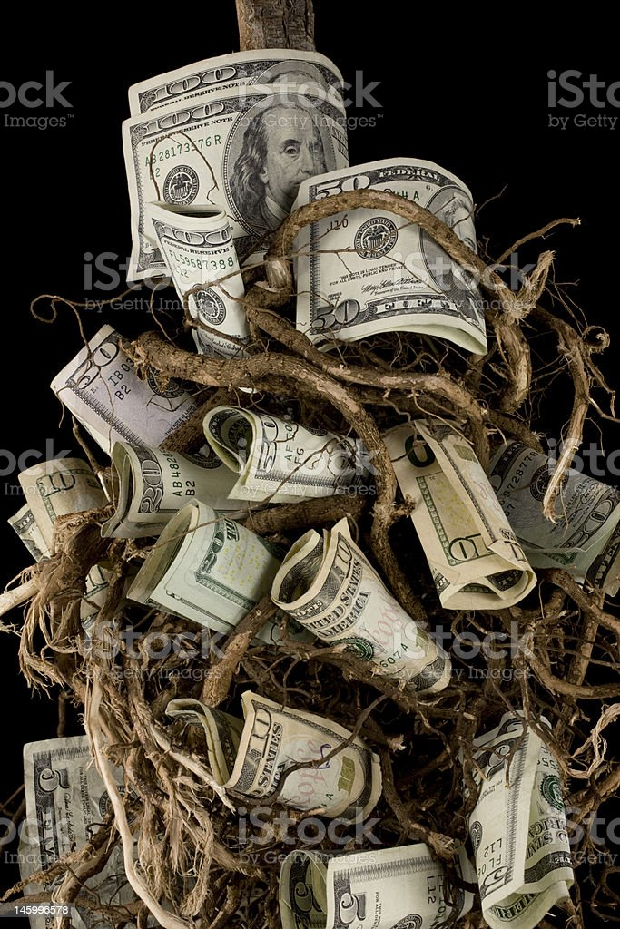 Money tree close up stock photo