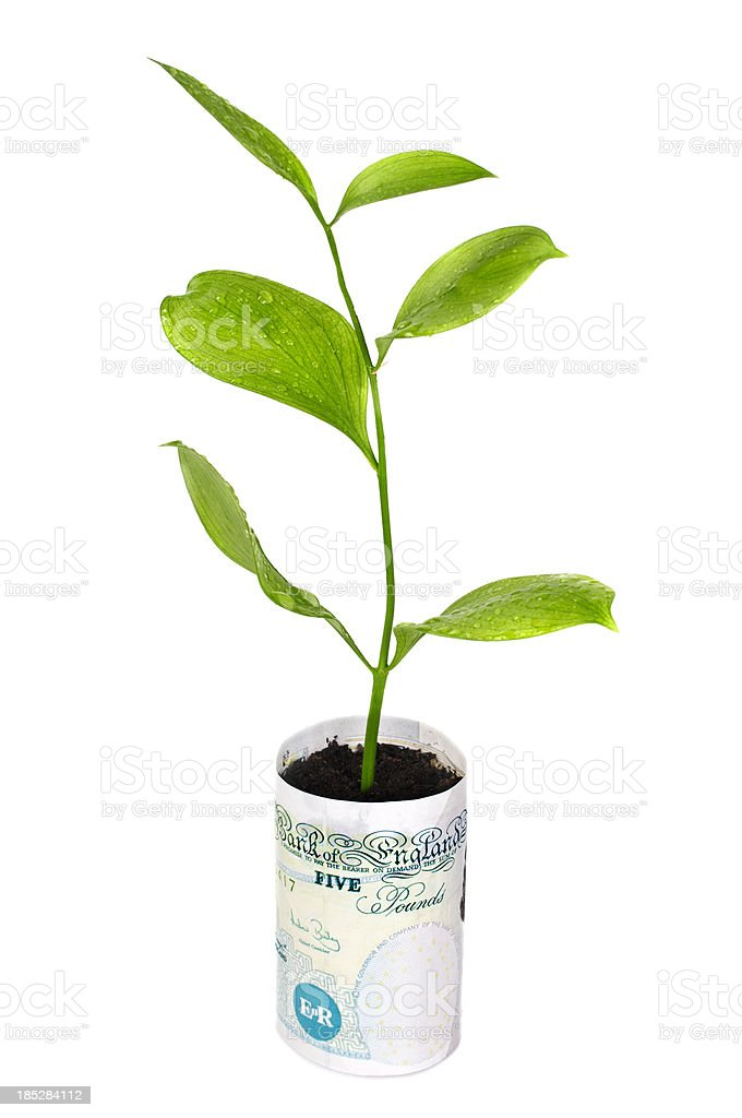 Money tree in bucket of British Pounds stock photo