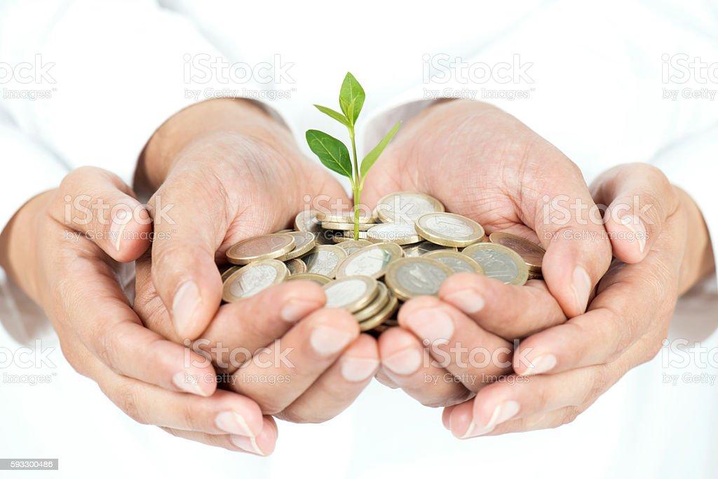 Money Tree in Hands stock photo