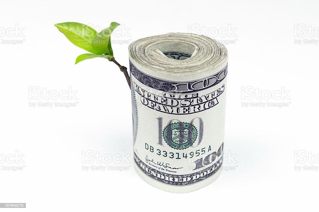 Money tree royalty-free stock photo