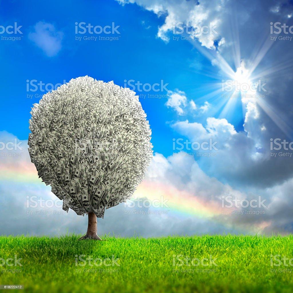 money tree stock photo