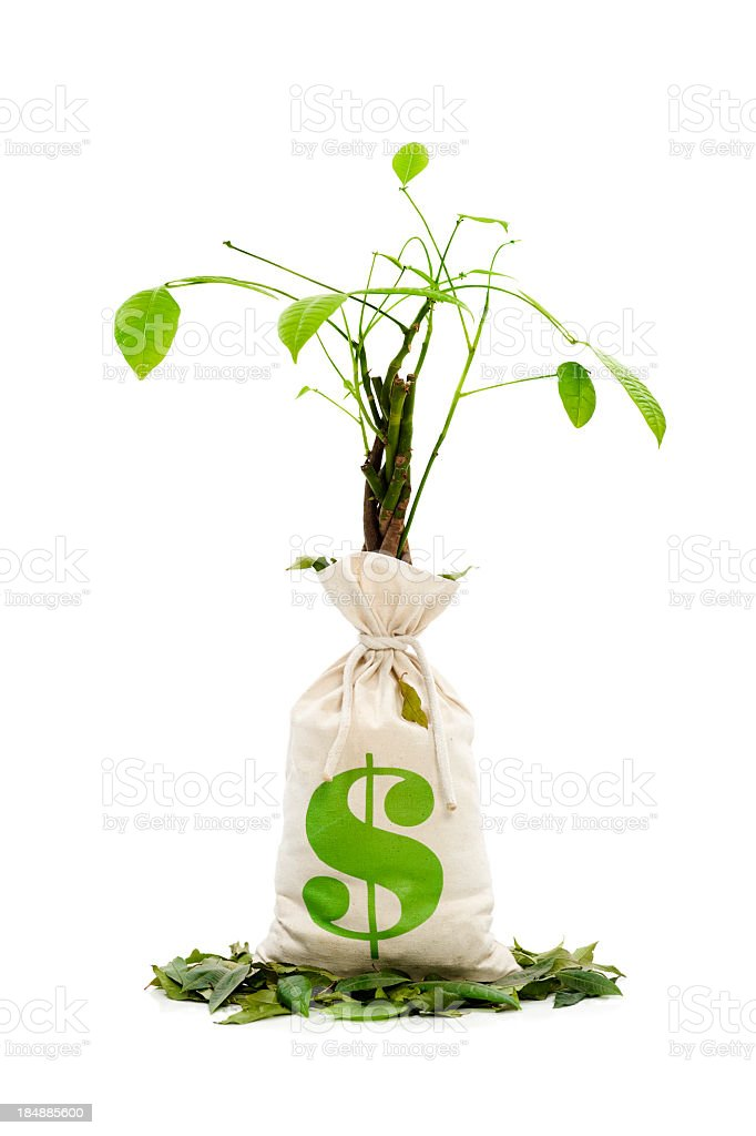 A money tree that is dying and shedding leaves royalty-free stock photo