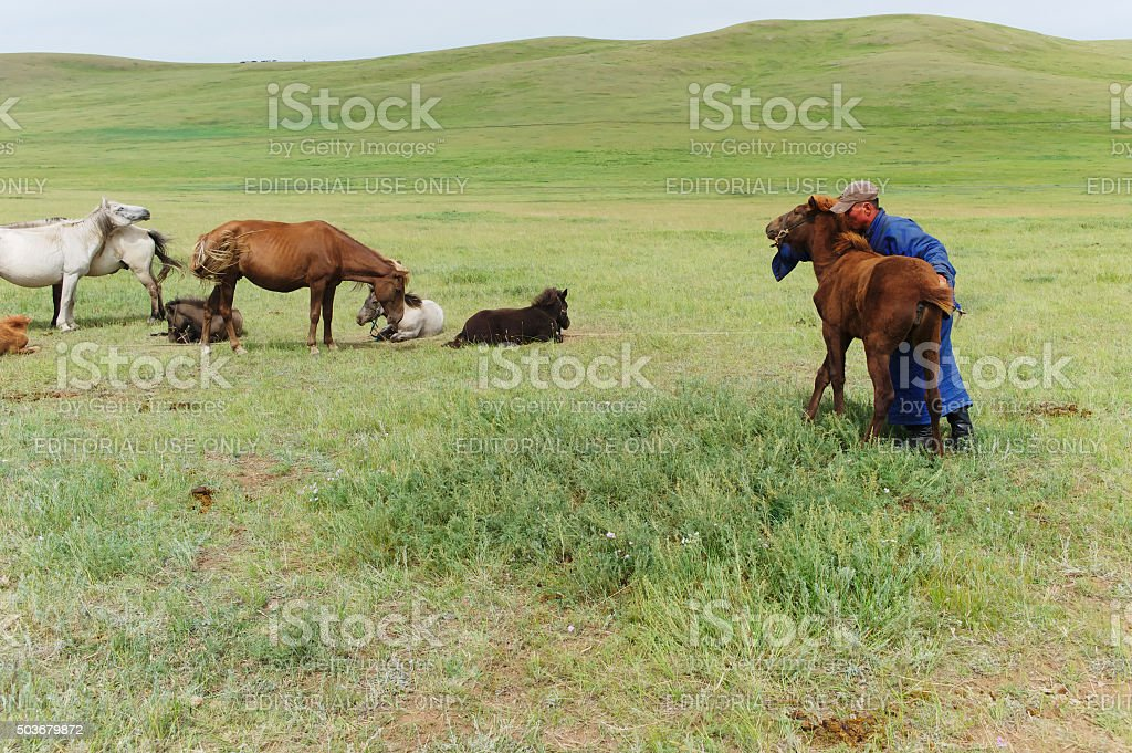 Mongol Wrangler stock photo