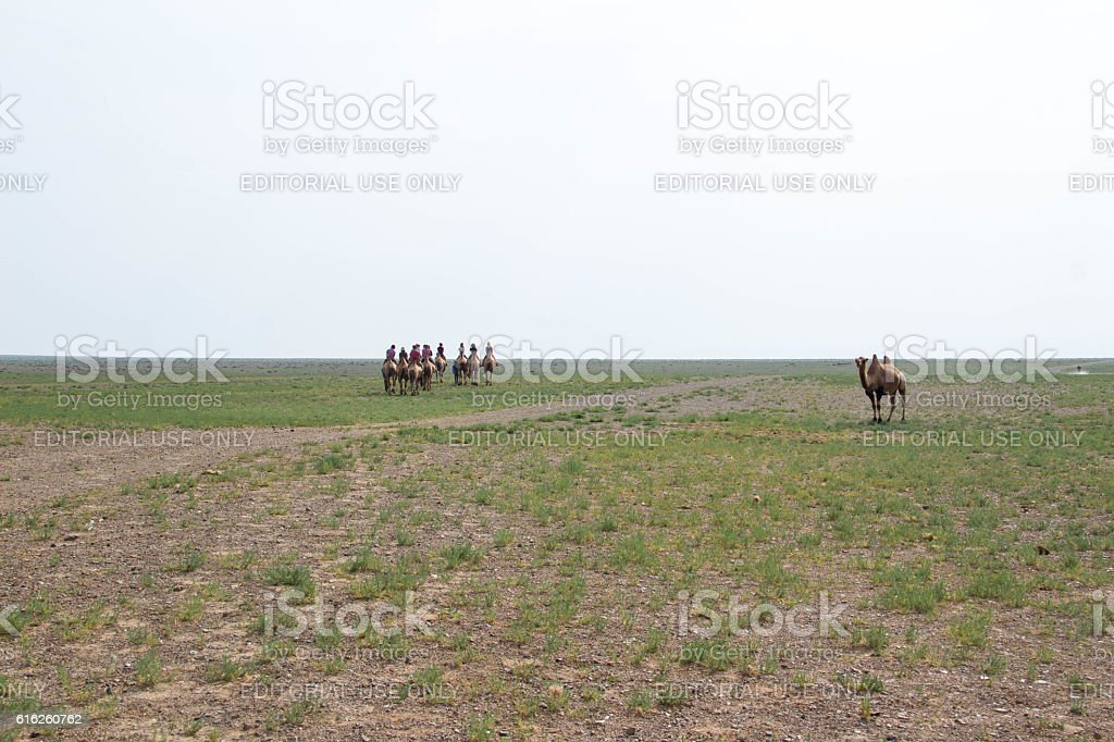 Mongolia: Bactrian Camels in the Gobi stock photo