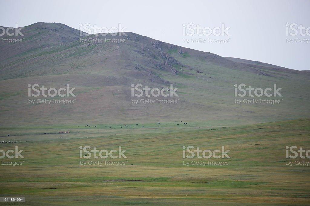 Mongolia: Middle Gobi stock photo