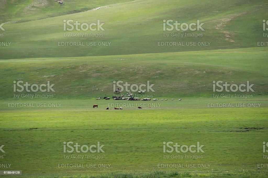 Mongolia: Sheep and Goat Herding stock photo