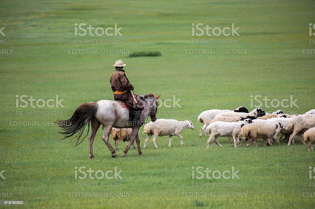 Mongolia: Sheep Herding stock photo