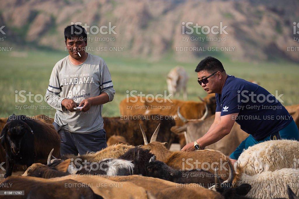 Mongolia: Watering Hole stock photo