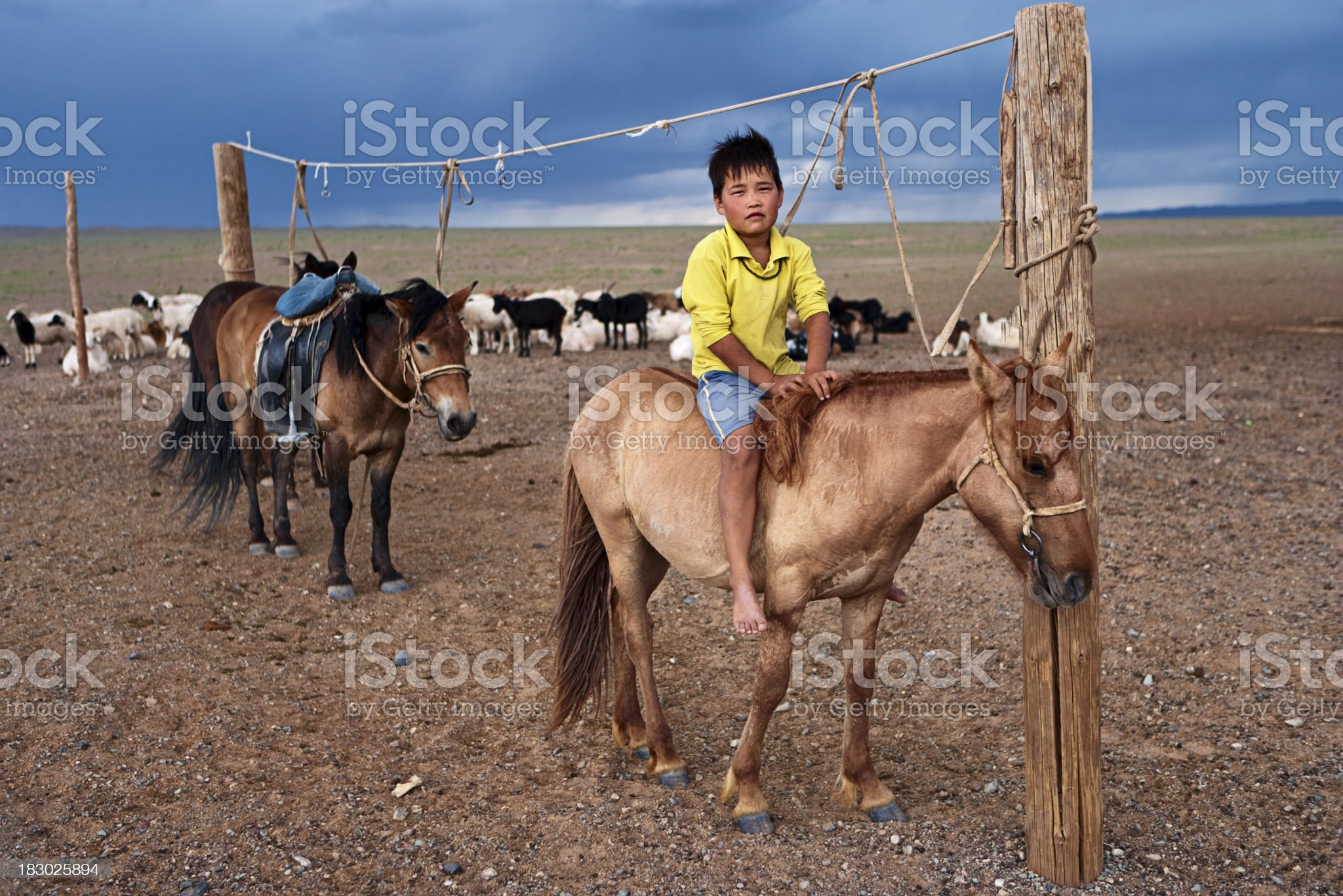 Mongolian boy with horse royalty-free stock photo
