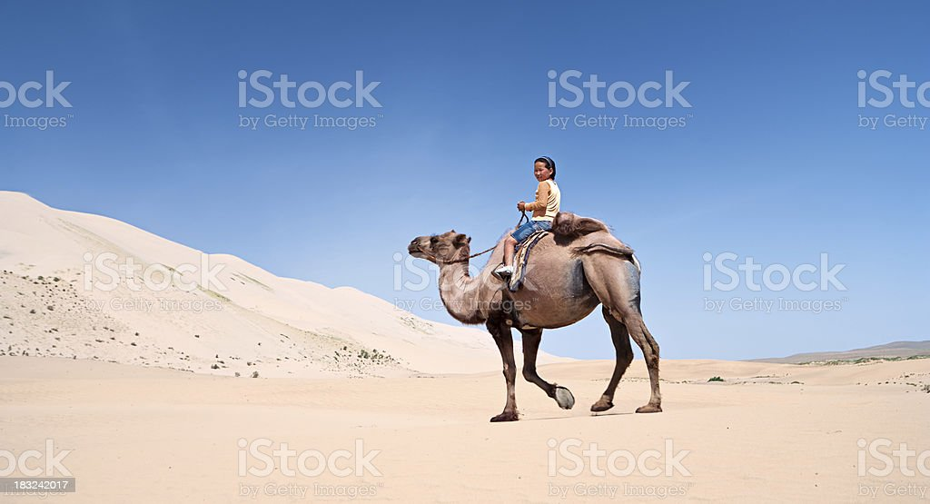 Mongolian girl riding on the camel stock photo