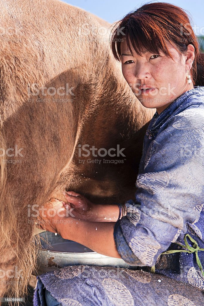 Mongolian woman in national clothing milking a yak stock photo