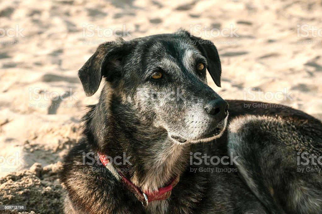 Mongrel dog on sand beach stock photo