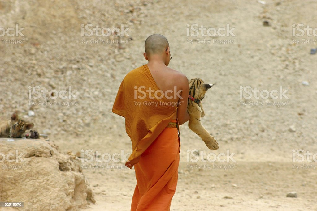 Monk and tiger stock photo