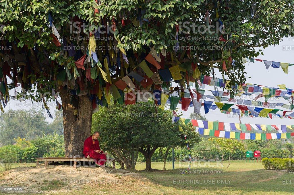Monk sitting under a tree in Lumbini, Nepal stock photo