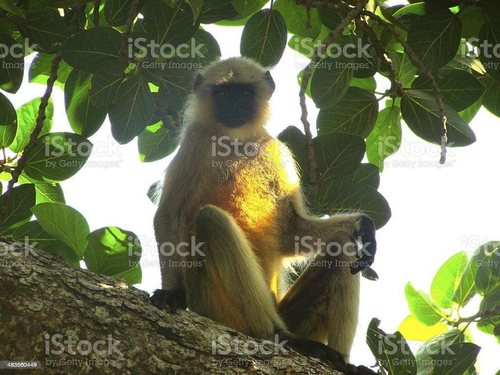 Monkey Above stock photo