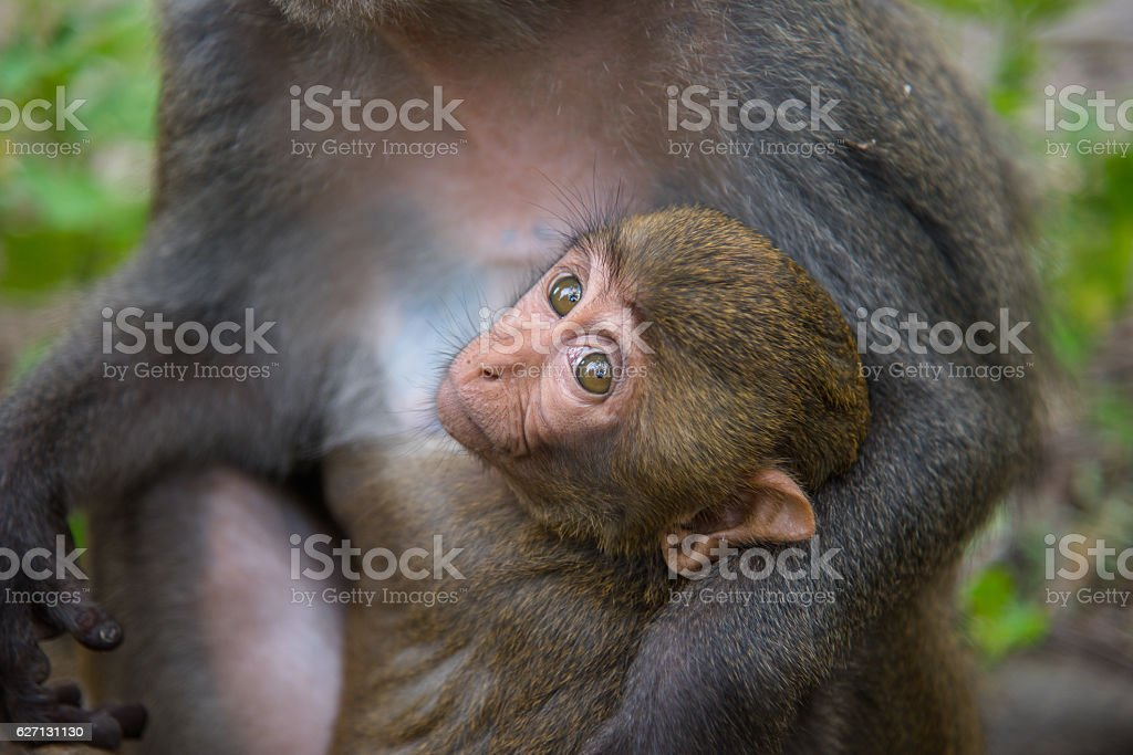 Monkey and baby eating stock photo