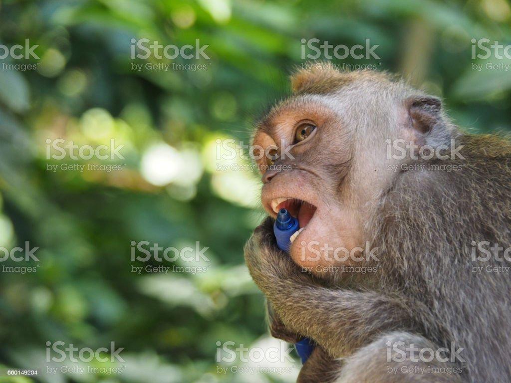 Monkey and Pen stock photo