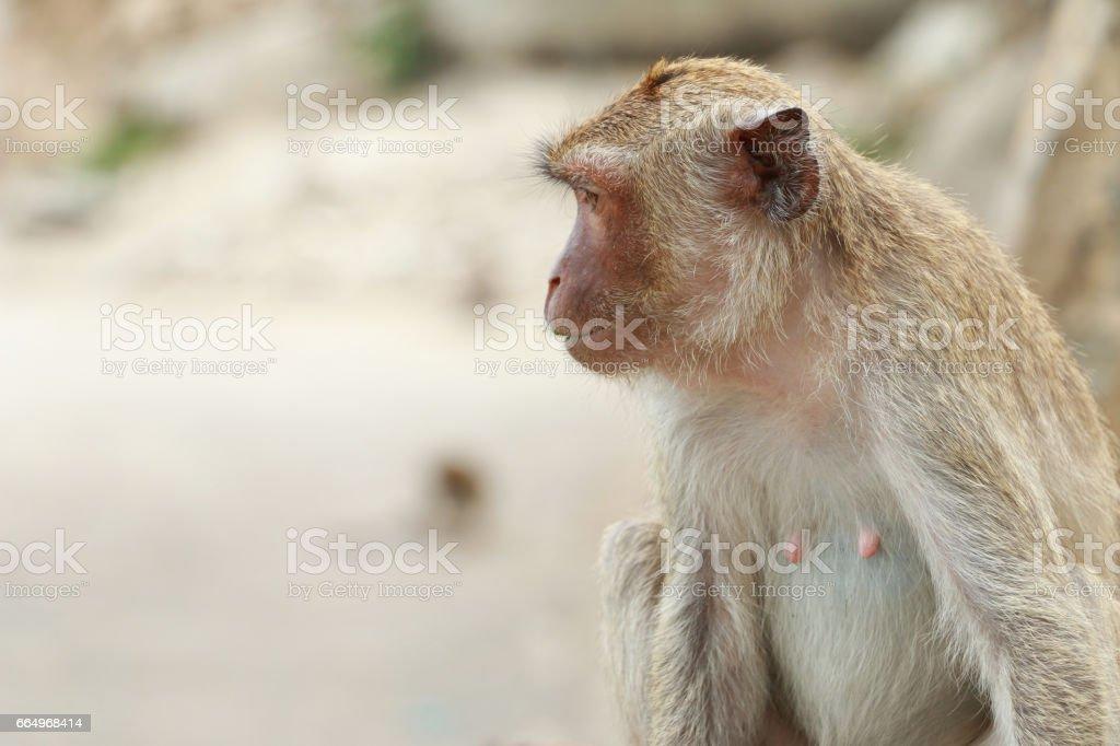 monkey animal living creatures background stock photo