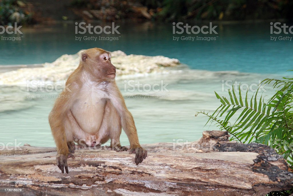 Monkey at Erawan Falls, Thailand stock photo