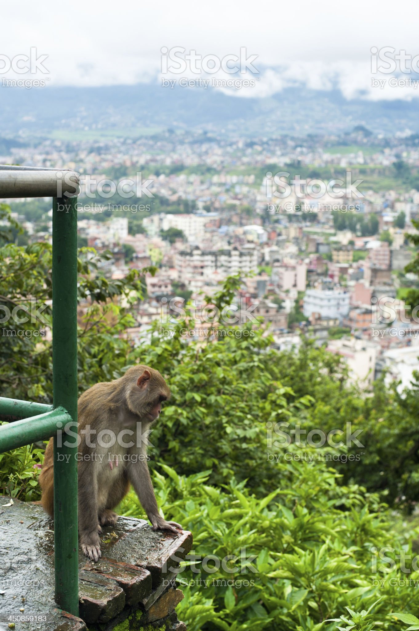 Monkey at Kathmandu. Nepal royalty-free stock photo