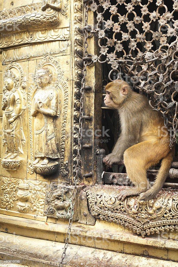 Monkey at Swayambhunath Stupa. Nepal royalty-free stock photo
