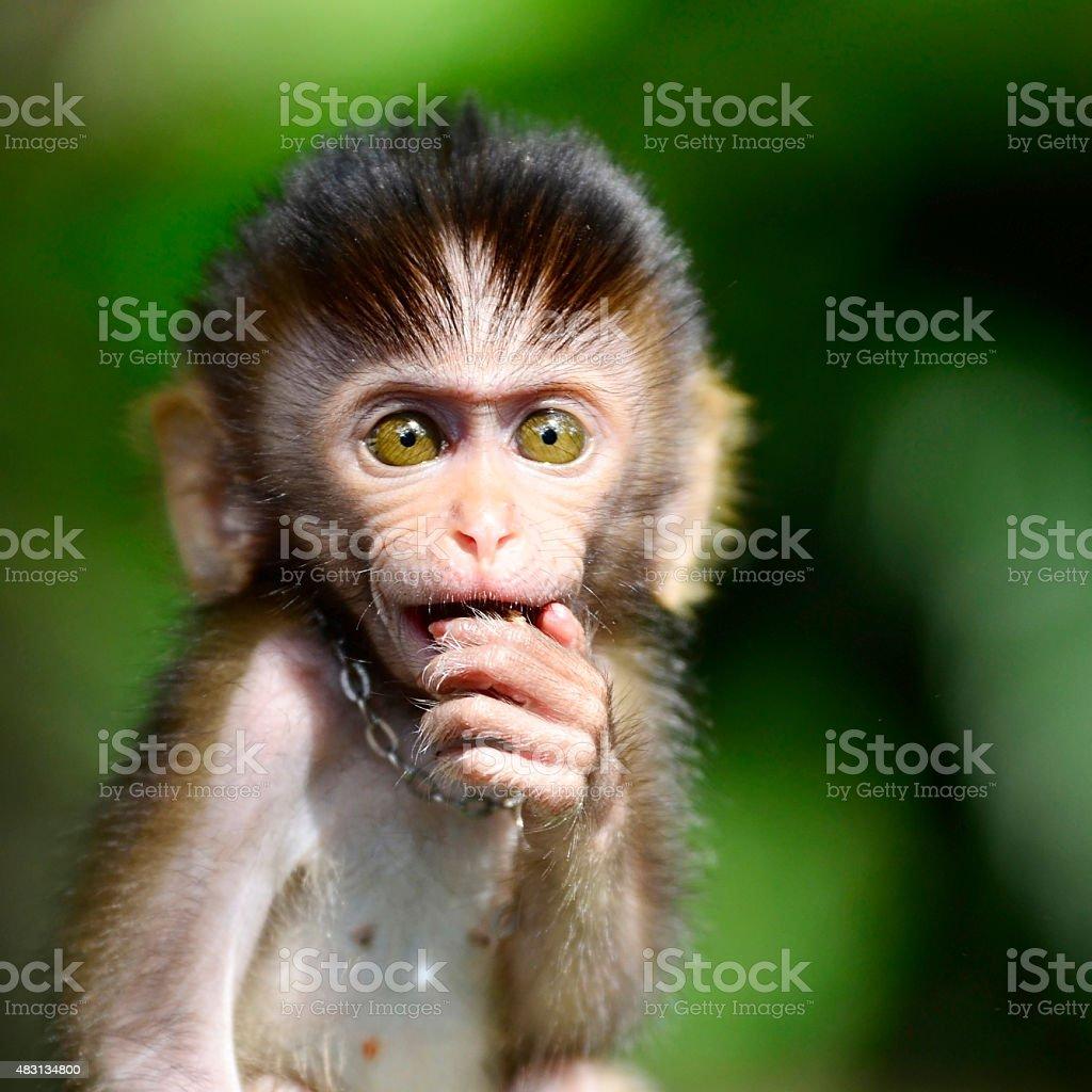 Monkey ball stock photo