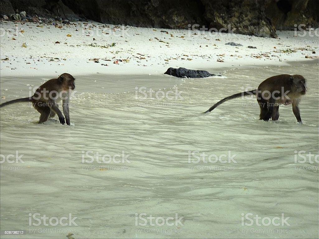 Monkey beach, PhiPhi Don island, Thailand stock photo
